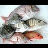 FISHERIES K. INTL SARL