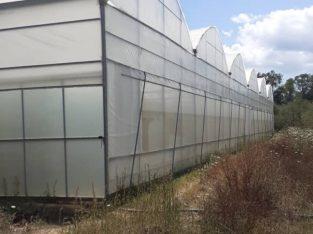 Serre agricole Professionelle MULTICHAPELLE GOTHIQUE, CIRCULAIRE, TUNNEL