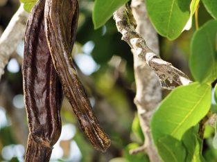 Produits agro-alimentaires naturels