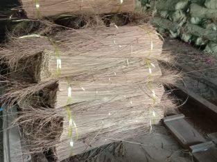 Palm Broom Stick