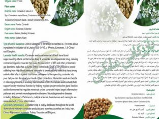 Export of coriander seeds and spices of Iranian me